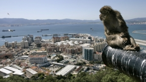 The relocation scheme is part of Gibraltar's macaque management plan