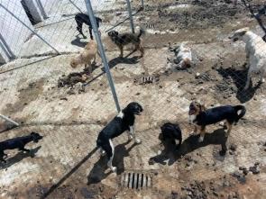 Officers found half eaten carcasses at the Velez Rubio dog pound
