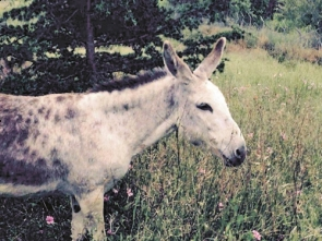 Romera disappeared last Friday from a securely fenced property between Guaro and Tolox