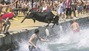 A bull jumping into the sea during the Bous a la Mar festival
