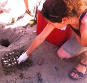 Equinac volunteer observes eggs in protected zone