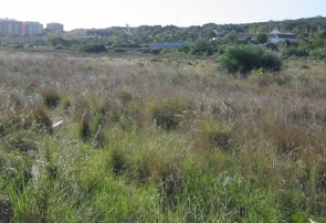 Part of the site slated for construction of the commercial centre (Photo: CDSN)