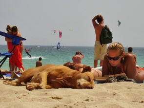 Dogs have been banned from beaches in the summer  (Photo: S. Davenport)