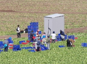Agricultural workers in Almería (Photo: R. Torné)
