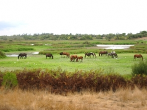 Concerns over environmental impact at Doñana national park