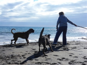 Dogs are permitted on certain beaches in Mojacar all year round