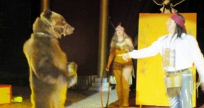 A muzzled bear which the associations claimed performed at the circus during the Almería fair