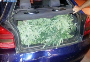 More than 10,000 drug related fines were issued in Almería