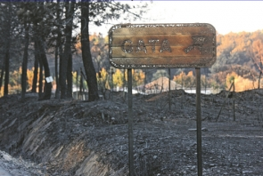 The new law allows building to go ahead on burnt land without the previously required 30-year moratorium