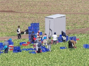 Agricultural workers in Almería