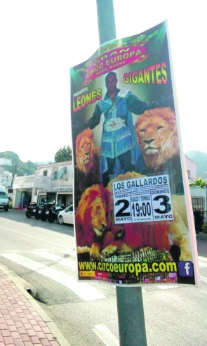 The circus poster featuring performing lions
