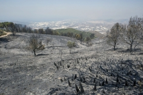 The blaze scorched over 2,000 hectares in several municipalities (Photo: EFE)