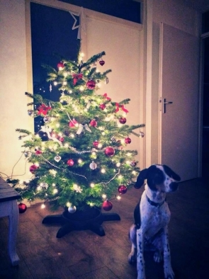 Bubble's new family even put the Christmas tree up especially for him to celebrate his arrival