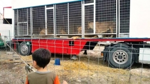 Animal rescue group Equinac presented photos of the caged animals as evidence to the Guardia