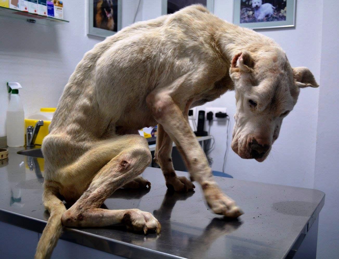 dog of death