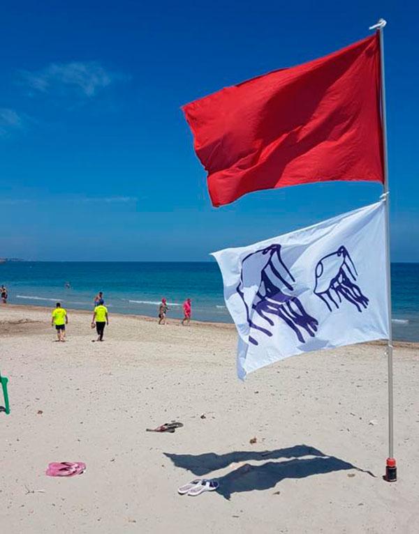 Waspada : Obor Obor Berbahaya Portuguese Man O' War Ditemui Di Pantai Sematan